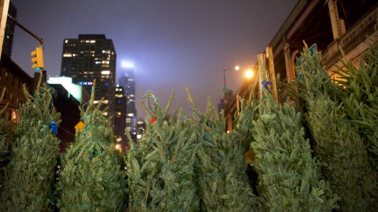 Photo of AMAZON PLANS TO SELL REAL SEVEN-FOOT CHRISTMAS TREES AND SHIP THEM WITHIN 10 DAYS OF BEING CHOPPED DOWN
